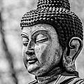 Buddha - Siddhartha Gautama - In Black And White by Colin Utz