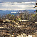 Burnt Blueberry Field In Maine by Keith Webber Jr