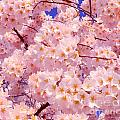 Bursting With Blossoms by Jeff at JSJ Photography