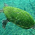 Busch Turtle  by David Nicholls
