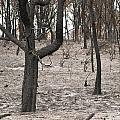 Bush Fire by Tim Hester