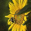 Busy Bee by Wynn Davis-Shanks