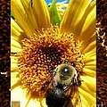 1 Busy Bumble L by Dale Crum