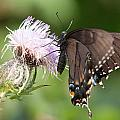Butterfly by Alex Grichenko