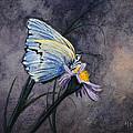 Butterfly by Bob Hallmark