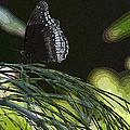 Butterfly Collection by Deborah Klubertanz