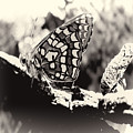 Butterfly In Black And White  by Cathy Anderson