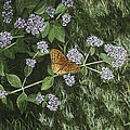 Butterfly On Oregano by Lucinda V VanVleck