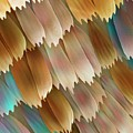Butterfly Wing Scales by Power And Syred