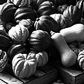 Bw Farm Market Acorn Butternut And Carnival Squash Michigan Usa by Sally Rockefeller