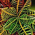 Cadiaeum Crotons Tropical Houseplant Shrub by Carol F Austin