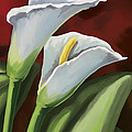 Calla Lilies  by Tim Gilliland