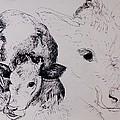 Calves, Gt Garnetts II Pen & Ink On Paper by Brenda Brin Booker