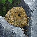 Campagnol Nest by Elaine Booth-Kallweit