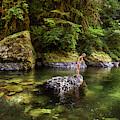 Cascade Locks, Oregon, Usa. A Woman by David Hanson