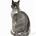 Cat by Claudia Hutchins-Puechavy