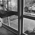 Cat Crying by Lynn Lennon