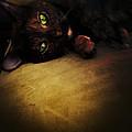Cat Eyes by Natasha Marco