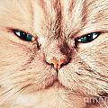Cat Face Close Up Portrait by Michal Bednarek