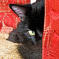 Cat Hiding Behind Drapes by Millard H. Sharp