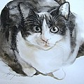 Cat In Black And White  by Alfred Ng