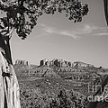 Cathedral Rock Framed By Juniper In Sedona Arizona by Ken Brown