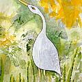 Cattle Egret by Sarah Rosedahl