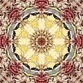 Cecropia Sun 4 by Lisa Lipsett