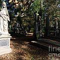 Cemetery by Sarka Olehlova