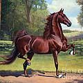 Ch. Merchant Prince by Jeanne Newton Schoborg