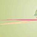 Chameleon Image002 by Thomas Lovgren