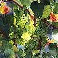 Chardonnay Au Soliel by Maria Hunt