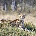 Cheetah Acinonyx Jubatus by Liz Leyden