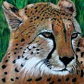 Cheetah by Carol McCarty