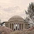 Cherry Blossoms by Jennifer Wheatley Wolf