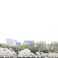 Cherry Blossoms - Washington Dc - 011316 by DC Photographer