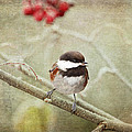 Chickadee In Winter by Peggy Collins