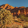 Cholla Cactus And Red Rocks At Sunrise by Panoramic Images