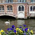 Church And Swan 2 by Crystal Nederman