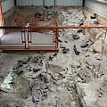 Cleveland-lloyd Dinosaur Quarry Fossils by Jim West