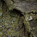 Closeup Of Bark Covered In Lichen by Sebastian Kujas