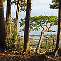 Coastal Rainforest Havelock Isl India by Konrad Wothe