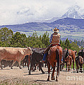 Colorado Cowboy Cattle Drive by Janice Pariza