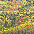 Colorful Autumn Forest In Mount Blue State Park Weld Maine by Keith Webber Jr