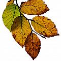 Colorful Leaves Isolated On A White Background by TouTouke A Y