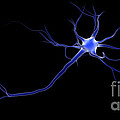 Conceptual Image Of A Neuron by Stocktrek Images