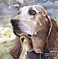 Coonhound - Pumpkin by Steve Hamlin