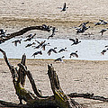 Coots-mud Hens by Brian Williamson