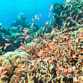 Coral Reef by MotHaiBaPhoto Prints