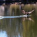 Cormorant Landing by John Johnson
